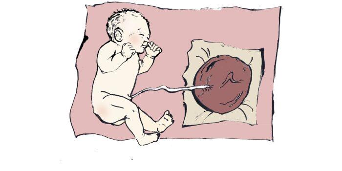 Poród lotosowy