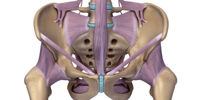 Anatomia mięśni dna miednicy kobiety